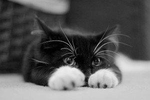 chaton-trop-mimi
